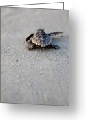 Sea Turtle Greeting Cards - A New Day Greeting Card by Michael Stothard