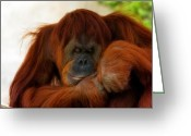 Orangutans Greeting Cards - A Orangutan Siesta Greeting Card by Lana Trussell