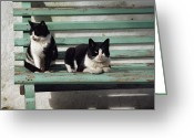 Rhodes Greece Greeting Cards - A Pair Of Cats On A Bench Greeting Card by James L. Stanfield