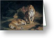 Laying Greeting Cards - A Pair of Leopards Greeting Card by William Huggins