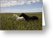 Midwestern States Greeting Cards - A Pair Of Protected Wild Horse Foals Greeting Card by Melissa Farlow
