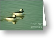 Migrant Greeting Cards - A Pair Of Reflecting Birds  Greeting Card by Jeff  Swan