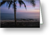 Atlantic Beaches Greeting Cards - A palm tree bears Greeting Card by Steve Winter