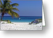 Atlantic Beaches Greeting Cards - A palm tree on a white Greeting Card by Raul Touzon