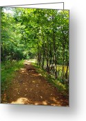 Country Scenes Photographs Greeting Cards - A Path Around The Pond Greeting Card by Robert Margetts