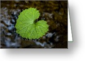 Close Views Greeting Cards - A Patterned Leaf Floats On The Summer Greeting Card by Stephen St. John