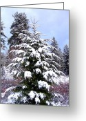 Rose Bushes Greeting Cards - A Peaceful Winter Day Greeting Card by Will Borden