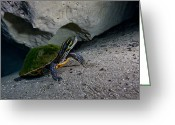 Red Bay Greeting Cards - A Peninsula Cooter Turtle On The Sandy Greeting Card by Michael Wood