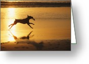 Domestic Scenes Greeting Cards - A Pet Dog Runs With A Frisbee Greeting Card by Bill Curtsinger