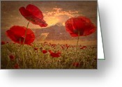 Pink Dawn Greeting Cards - A Poppy Kind of Morning Greeting Card by Debra and Dave Vanderlaan