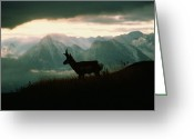 Bison Range Greeting Cards - A Pronghorn Stands On A Grassy Hillside Greeting Card by Sam Abell