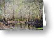 Cypress Knees Greeting Cards - A Quiet Back Woods Place Greeting Card by Carolyn Marshall