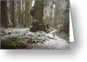 Del Norte Greeting Cards - A Rare Snow Dusts The Trail Through Del Greeting Card by Michael Nichols