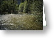 Yosemite Creek Greeting Cards - A rattlesanke coils up Greeting Card by Joel Sartore