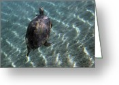Red Bay Greeting Cards - A Red-bellied Cooter Turtle Swims Greeting Card by Terry Moore