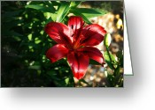 Close-up Greeting Cards - A Red Day Greeting Card by Kelly Rader