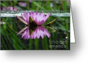Plants Greeting Cards Greeting Cards - A Reflection of A Fuchsia Water Lily Greeting Card by Chad and Stacey Hall