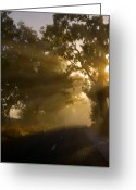 Mist Greeting Cards - A Road less Traveled Greeting Card by Mike  Dawson