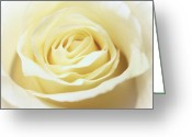 Nature Photograph Greeting Cards - A Rose... Greeting Card by Elizabeth Budd
