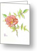 Garden Decoration Mixed Media Greeting Cards - A Rose in Brigadoon Greeting Card by Kip DeVore