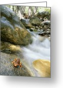 Amphibians Greeting Cards - A Rough-skinned Newt Sits On A Rock Greeting Card by Rich Reid