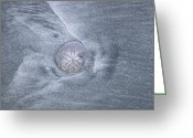 Generic Greeting Cards - A Sand Dollar On A Beach, With Patterns Greeting Card by Stephen Sharnoff