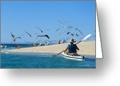 Sea Kayak Greeting Cards - A Sea Kayaker Paddles Past Pelicans Greeting Card by Bill Hatcher