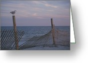 Wood Fences Greeting Cards - A seagull pauses Greeting Card by Stacy Gold