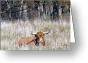 Indiana Autumn Greeting Cards - A Shaggy Beast Greeting Card by Susan Olga Linville