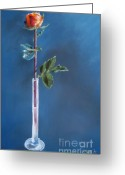 Plants Pastels Greeting Cards - A Single Rose Greeting Card by Sabina Haas