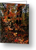 Indiana Autumn Greeting Cards - A Slash of Sunlight Greeting Card by Julie Dant