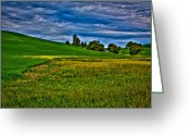 Rapeseed Greeting Cards - A Sliver of Canola Greeting Card by David Patterson