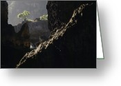 Trees And Rock Cliffs Greeting Cards - A Small Sunlit Tree Sits On Top Greeting Card by Justin Guariglia