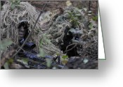 Firearms Photo Greeting Cards - A Sniper Team Spotter And Shooter Greeting Card by Stocktrek Images