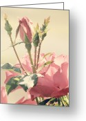 Pink Flower Prints Greeting Cards - A Soft Sweet Note Greeting Card by Amy Tyler