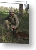 Taking A Break Greeting Cards - A Soldier And His Search Dog Taking Greeting Card by Stocktrek Images