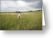 Sheepdog Greeting Cards - A Spanish Waterdog Running Through A Field Greeting Card by Julia Christe