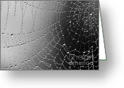 Ronnie Glover Greeting Cards - A Spider Designs The Universe Greeting Card by Ronnie Glover