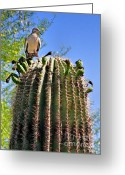 Southwestern Greeting Cards - A Spiky Home Greeting Card by Christine Till