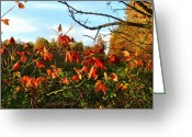 Reds Of Autumn Photo Greeting Cards - A Splash of Red II Greeting Card by Julie Dant