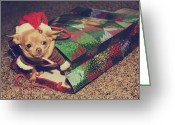 Chihuahua Greeting Cards - A Sweet Christmas Surprise Greeting Card by Laurie Search
