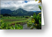 Landscapes Framed Prints Greeting Cards - A Taro Farm in Hanalei Greeting Card by Kathy Yates