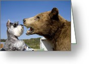 Stuffed Animals Greeting Cards - A Terrier Cautiously Sniffs A Large Greeting Card by Stephen St. John