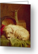 Pets Portraits Greeting Cards - A Terrier Greeting Card by John Fitz Marshall