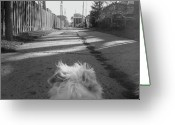 Terriers Greeting Cards - A Terriers Perspective Greeting Card by Reb Frost