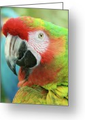 Pacific Art Greeting Cards - A Thing of Beauty is a Joy Forever Greeting Card by Sharon Mau