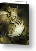 Crabbing Greeting Cards - A Time to Shed Greeting Card by Rebecca Sherman