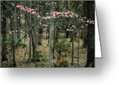 Beautiful Flowering Trees Greeting Cards - A Touch of Pink Greeting Card by JC Findley
