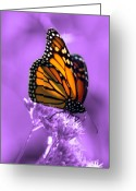 Butterfly Greeting Cards - A Touch of Summer  Greeting Card by Cathy  Beharriell
