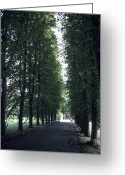 Professors Greeting Cards - A Tree Lined Path On The University Greeting Card by Taylor S. Kennedy